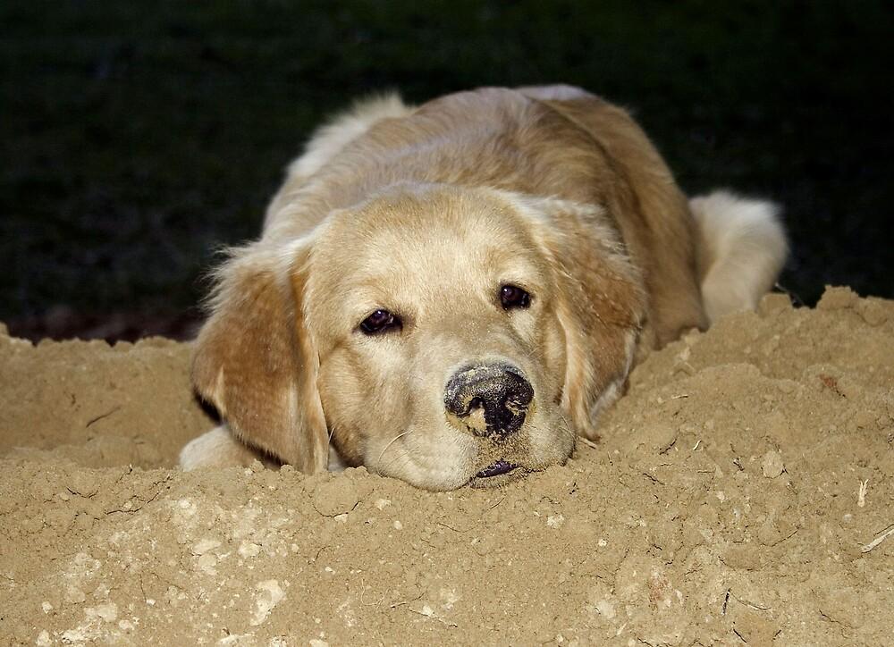 My Dirt  by LazyDays
