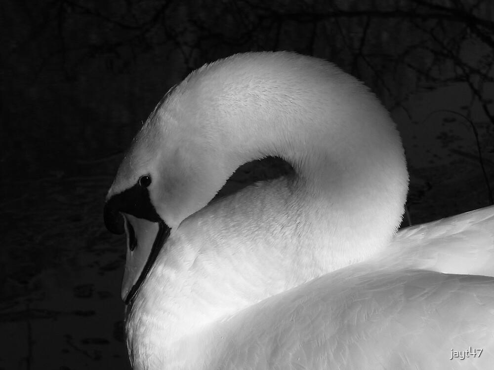 Swan by jayt47