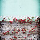 Roses on a wall by Silvia Ganora