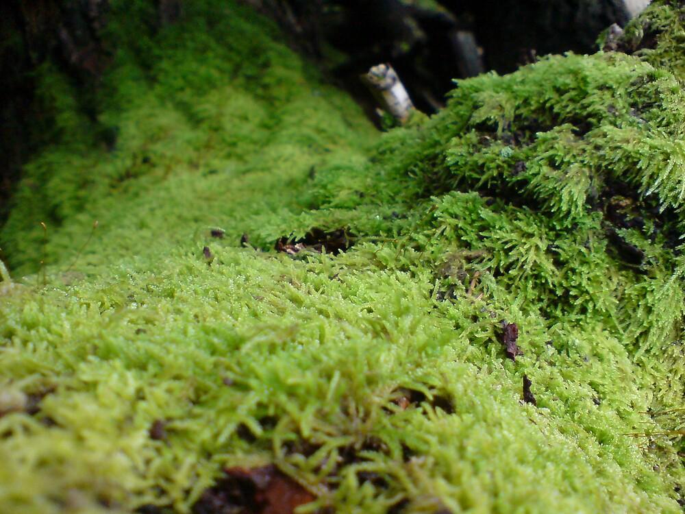 Soft Moss by DanGoodwin