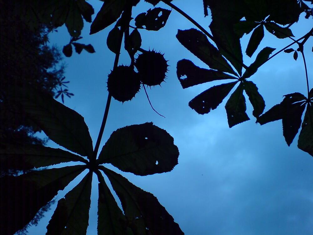Chestnut Silhouette by DanGoodwin
