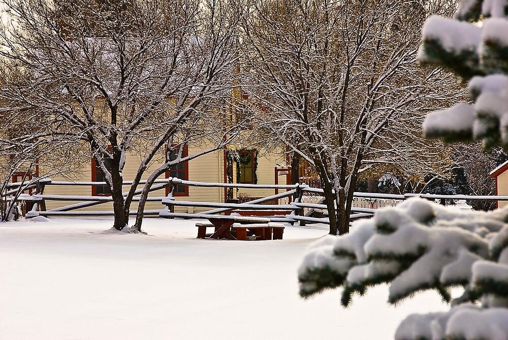 Winter by maddtom