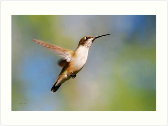 Hummingbird In Flight by Christina Rollo