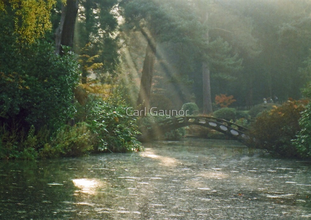 'Sun - Mist - Garden'  by Carl Gaynor