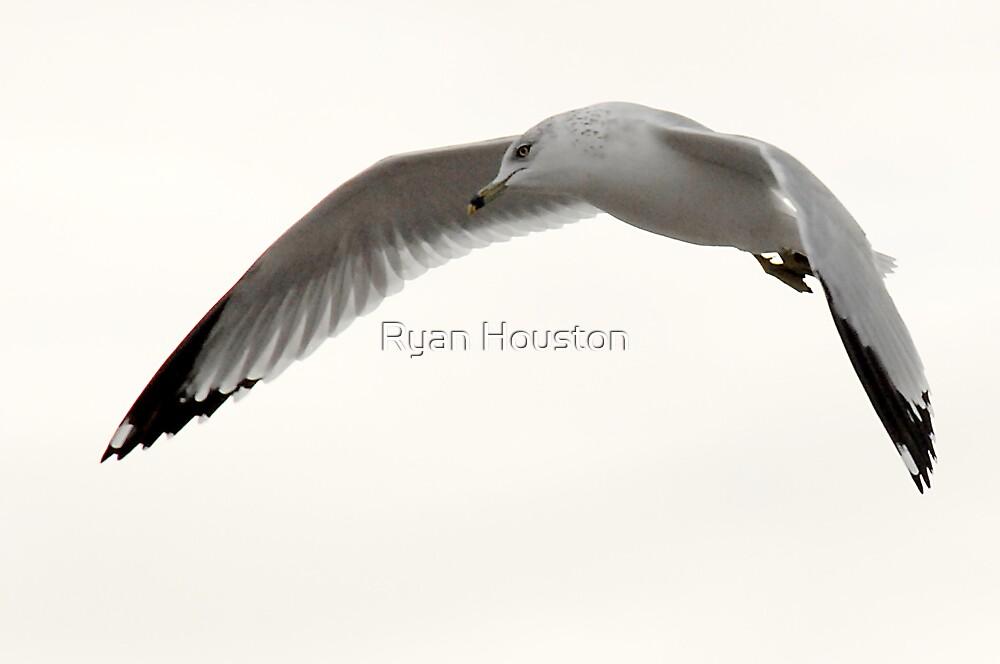 Flying Seagull  by Ryan Houston