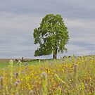 Wildflowers and Tree by John Butler