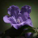 Purple flower 5586 by João Castro
