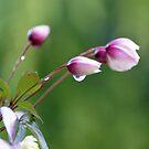 Delicate little buds  by Joyce Knorz