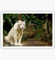 Unhappy Tiger Sticker