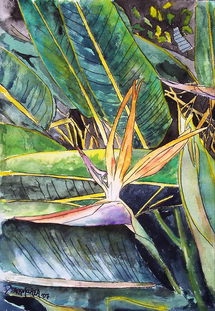 Bird of Paradise Tropical Flower by derekmccrea
