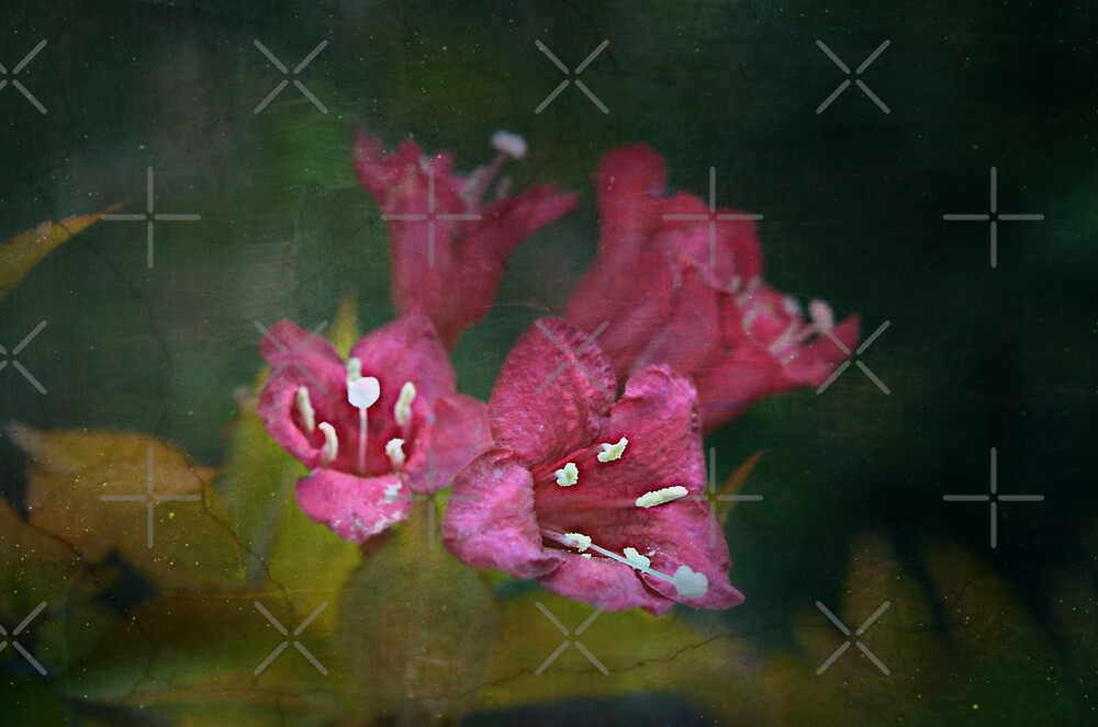 Forgotten Fragments by Scott Mitchell