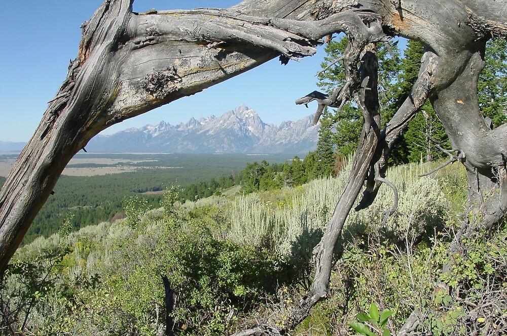 Signal Mtn GTNP Wyoming by carick