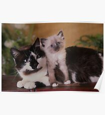 Cute Cat sitting with her kitten Poster