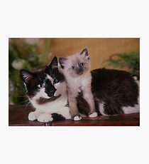 Cute Cat sitting with her kitten Photographic Print