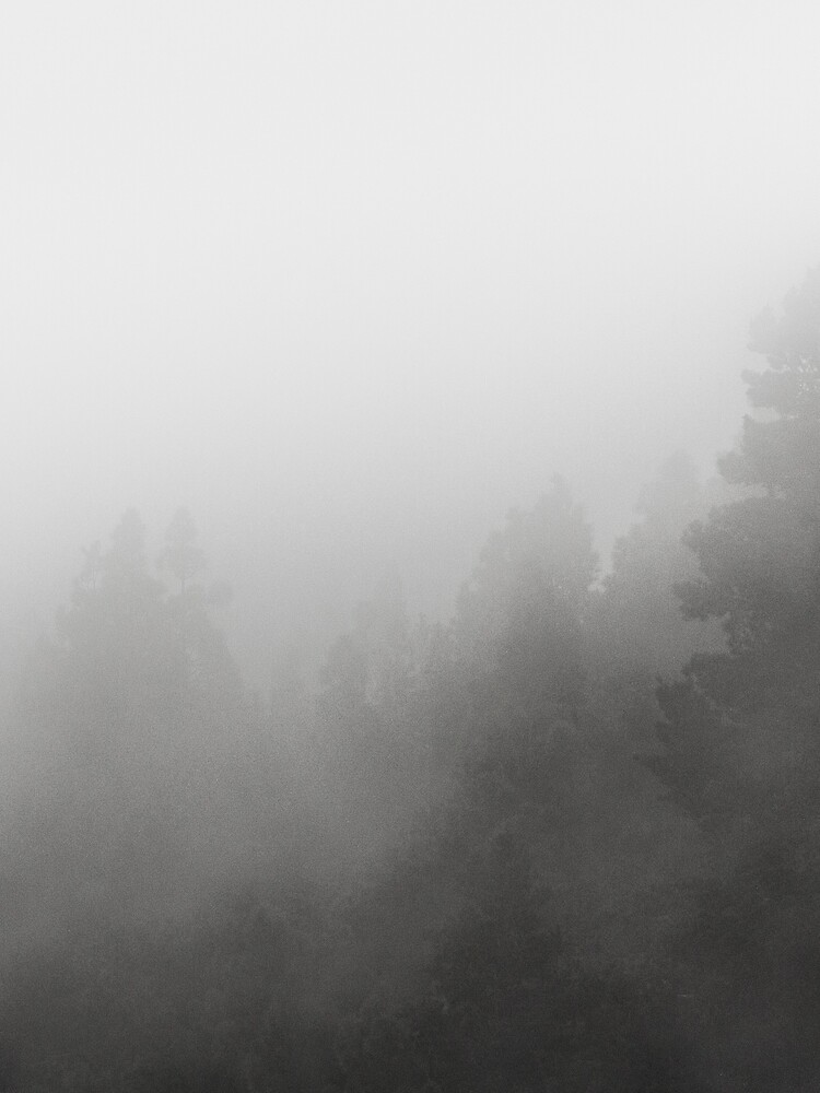 foggy forest , trees in fog / clouds 2 by ohaniki