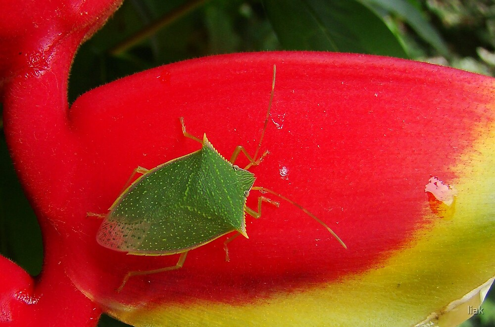 just a bug by liak