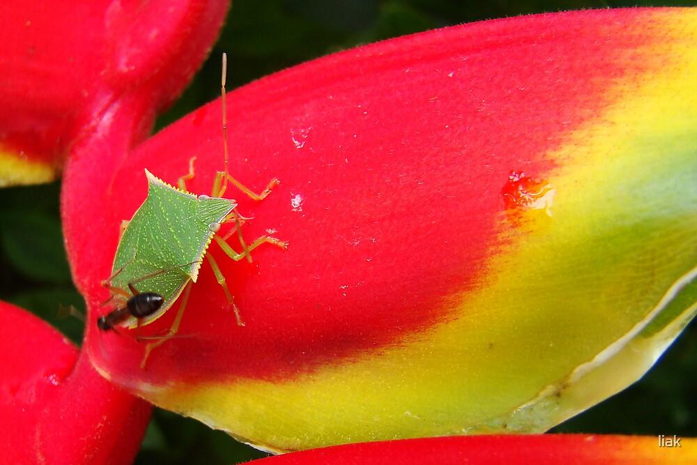 love bug by liak