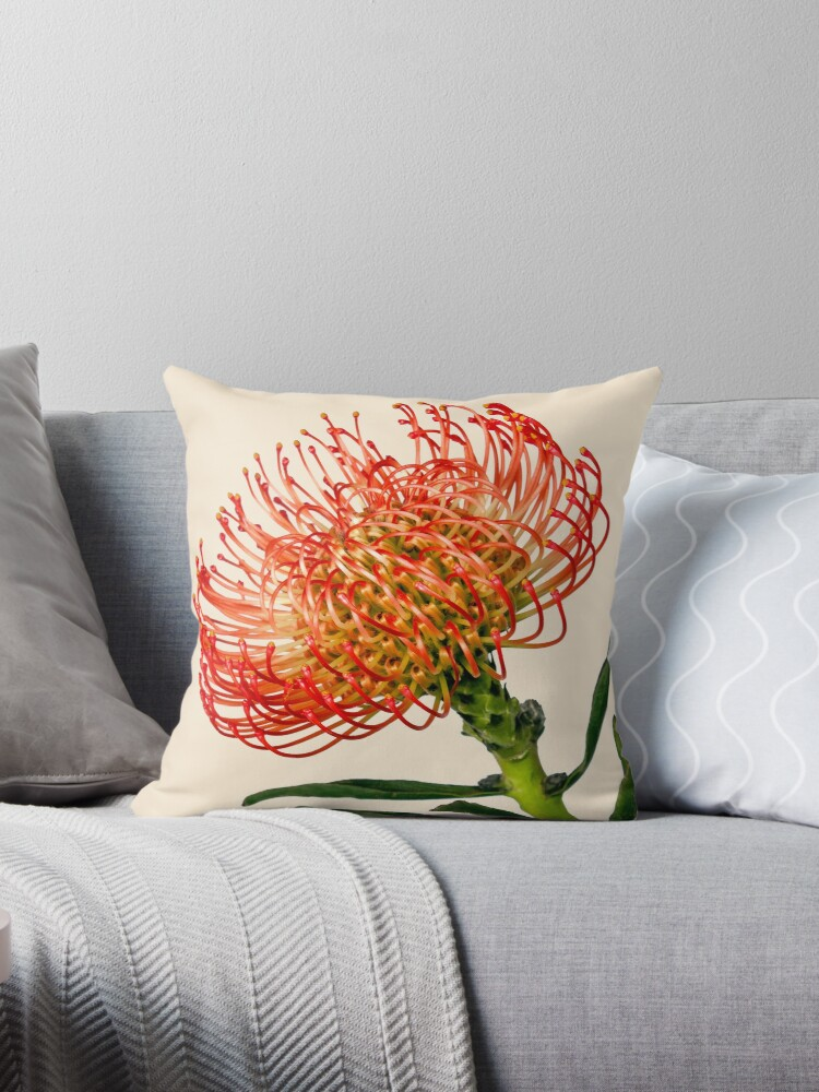 Bright Red Pincushion Protea by Scotch Macaskill