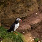 Puffin by Michael Hadfield