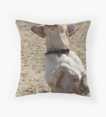 I Want That Ball! Throw Pillow