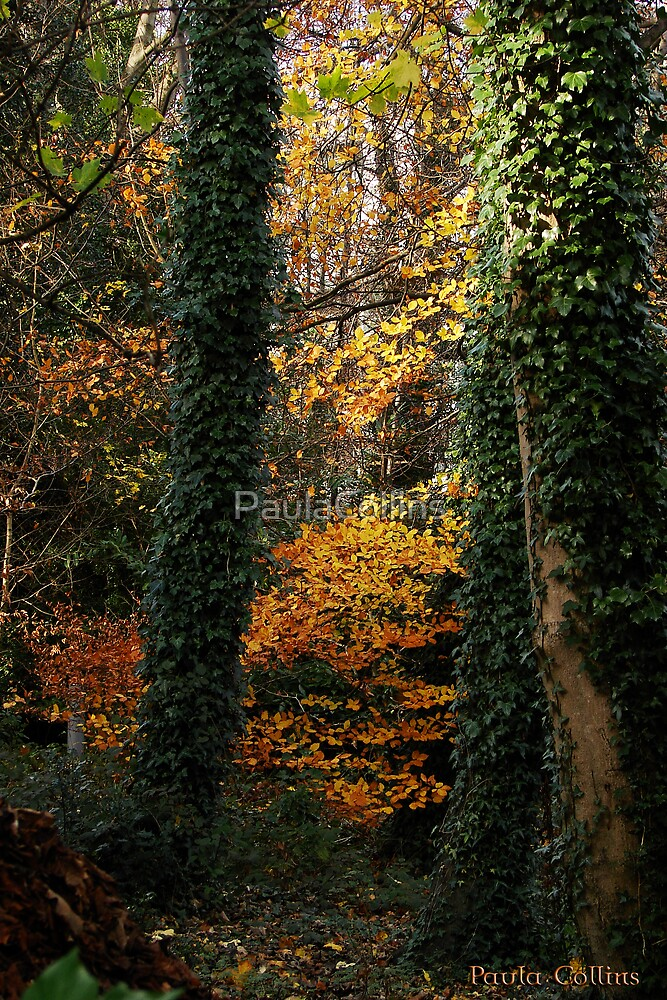 Autumn Trees by PaulaCollins