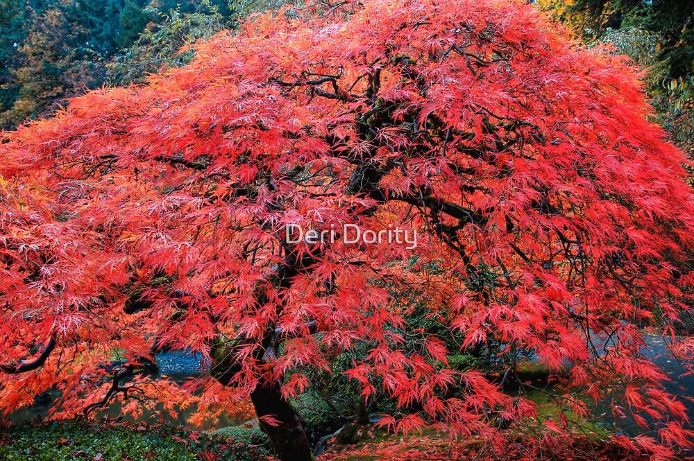 Maple by Deri Dority