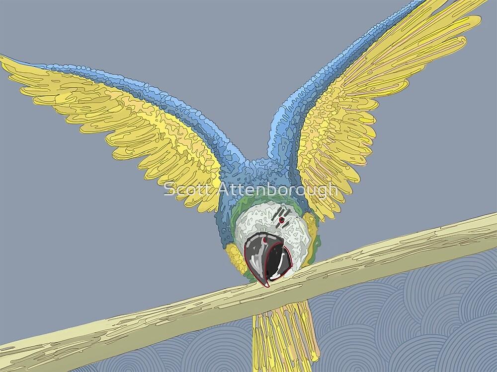 Montessori Macaw by Scott Attenborough