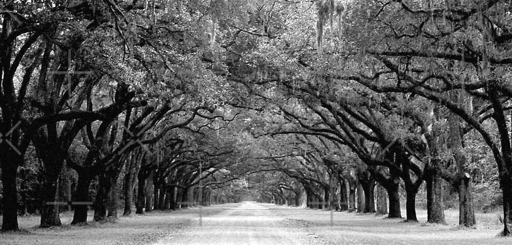 Wormsloe's Avenue by Julie's Camera Creations <><
