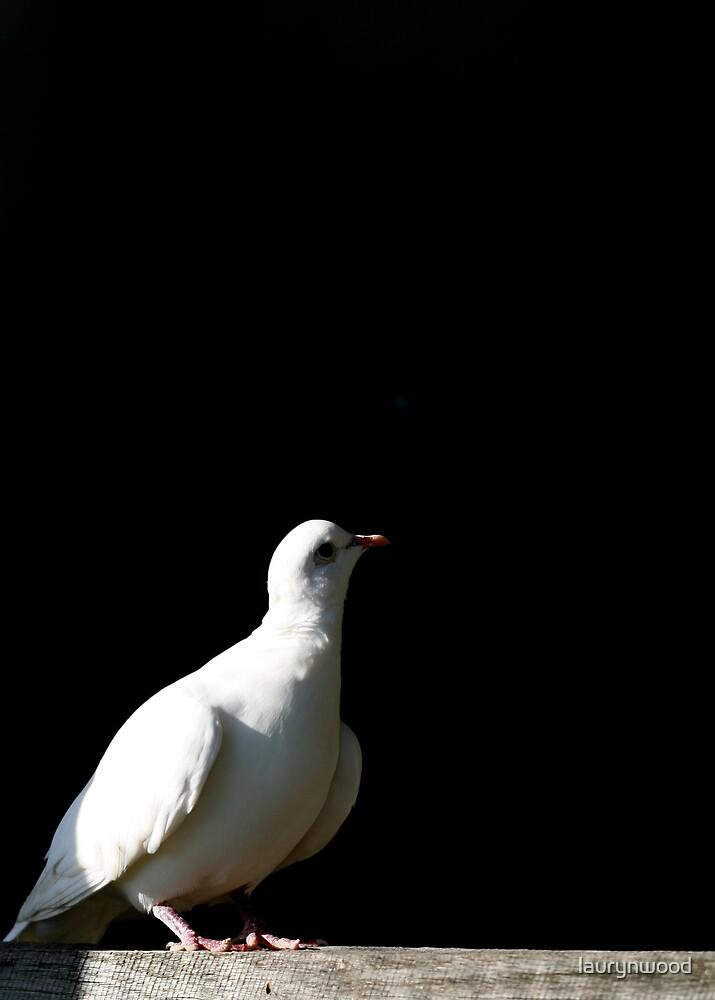 Dove by laurynwood