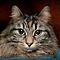 Close-up Portrait of A Pet