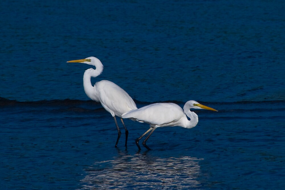Great Egrets, Lee Point, NT by Keith McGuinness