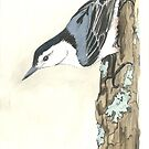 White Breasted Nuthatch - Watercolor by skidgelstudios