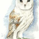 Barn Owl- Watercolor by skidgelstudios
