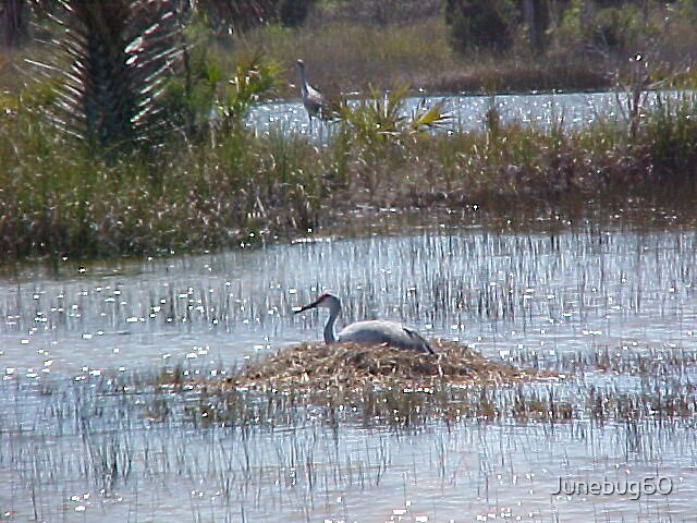 Nesting Time by Junebug60