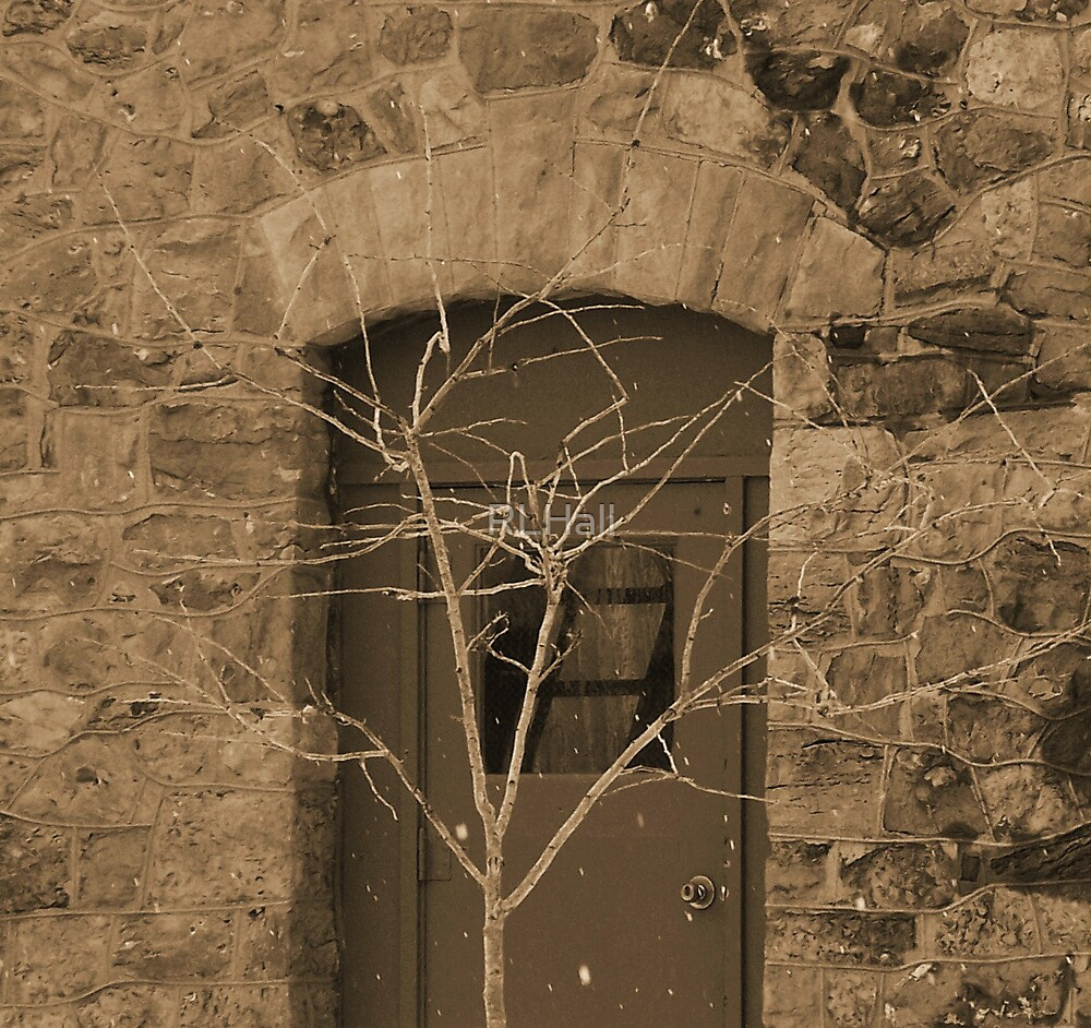 The Brown Door by RLHall