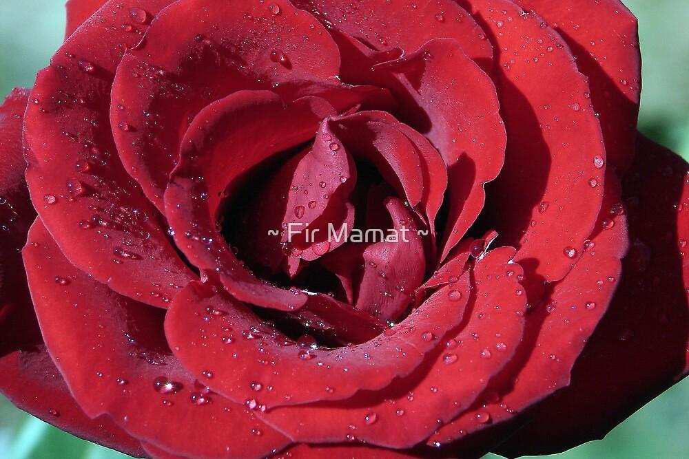 Red Rose after Rain by ~ Fir Mamat ~