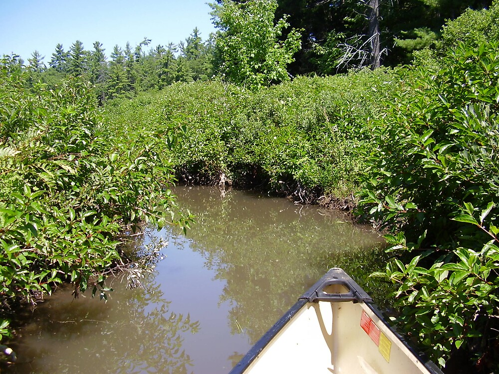 Me in the marshland just north of algonquin park by Raymond Carle