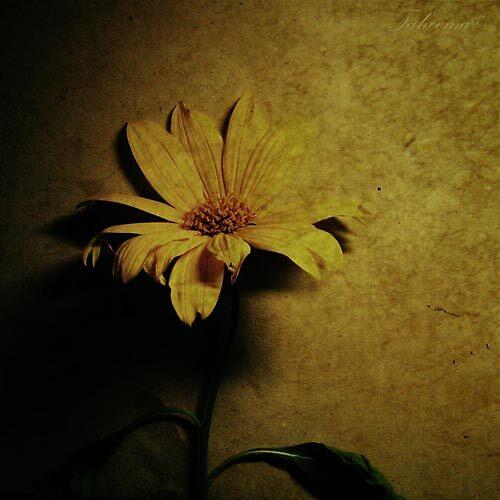 Like Honey by Faheema Patel