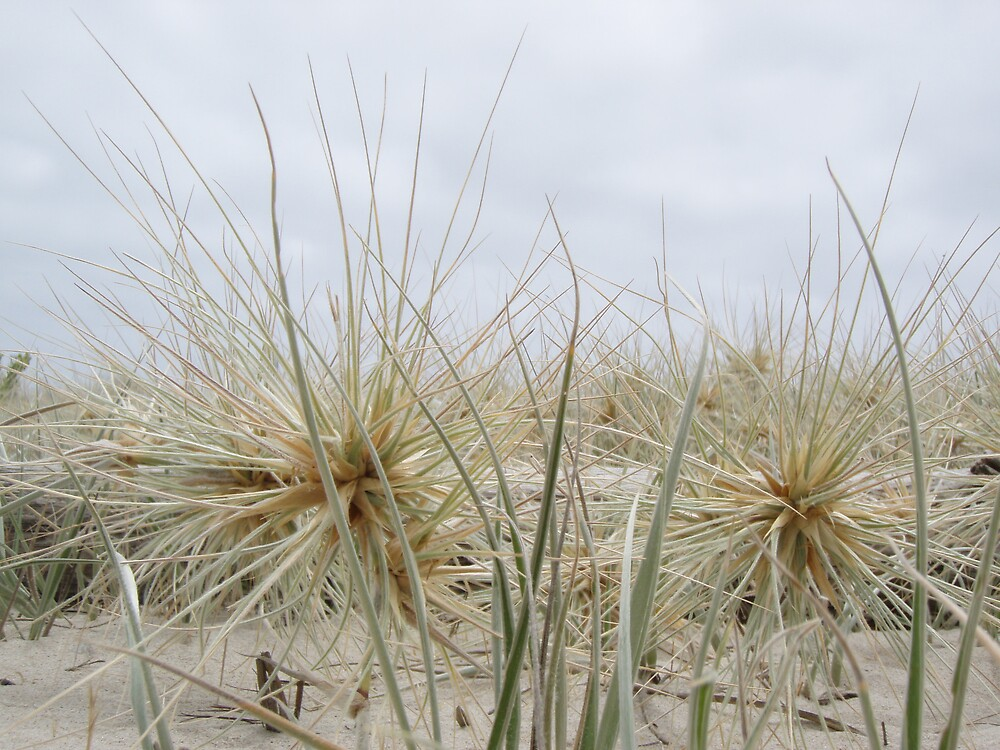 """""""aliens"""" - spiky plants at the beach (view larger - better impact) by gaylene"""