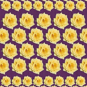 Yellow Rose on Purple by STHogan