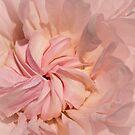 Delicate heritage rose by Celeste Mookherjee