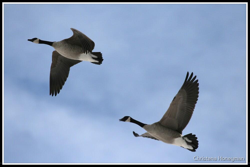 Snow Geese by Christena Honeyman