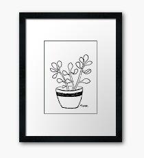 Succulent love (Echeveria seedlings) Framed Print