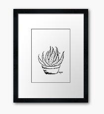 Aloe love (Marlothii) Framed Print