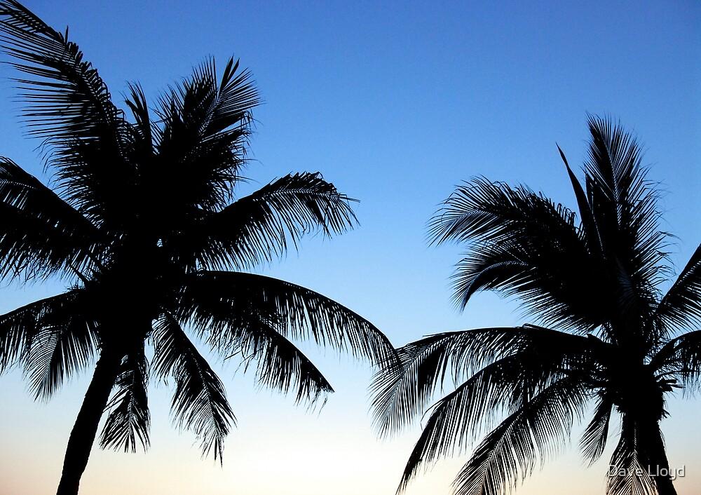 Palms by Dave Lloyd