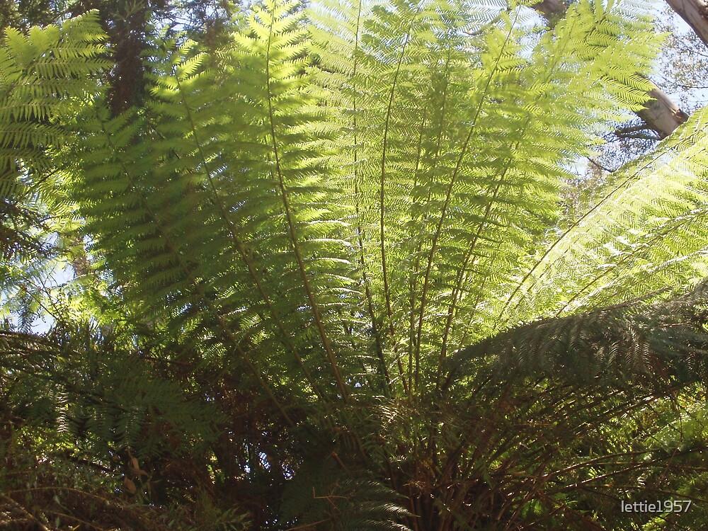 tree fern  by lettie1957