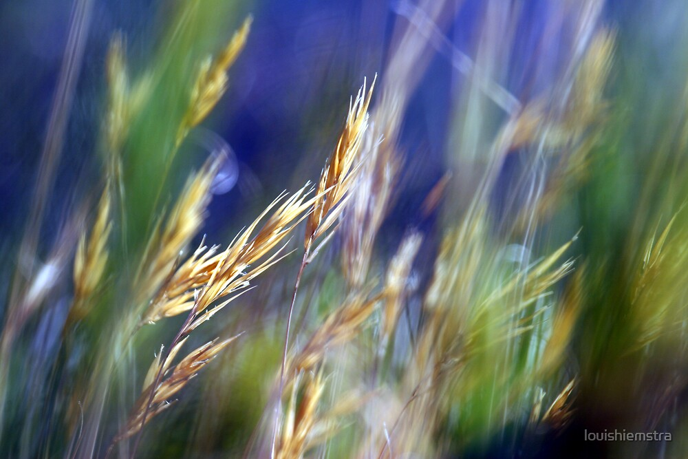 Grass II by louishiemstra