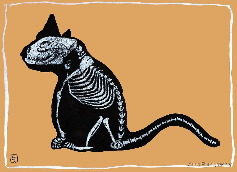 Cat X-ray - Dusty Orange by Anne Pennypacker