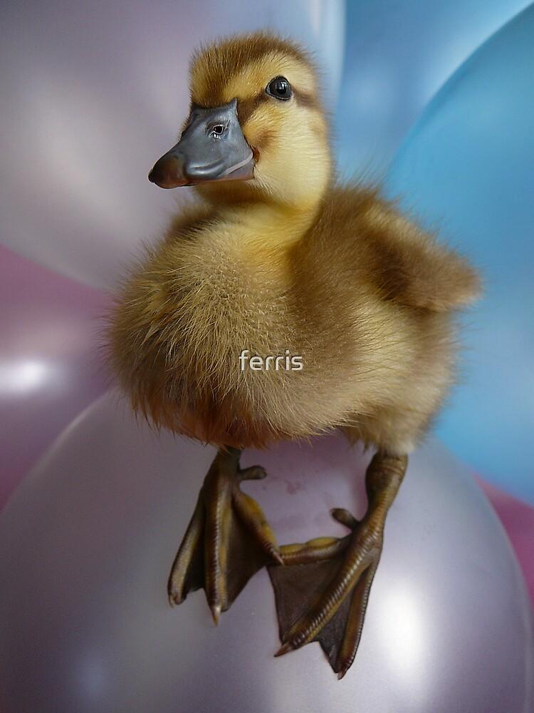 Ducki by ferris