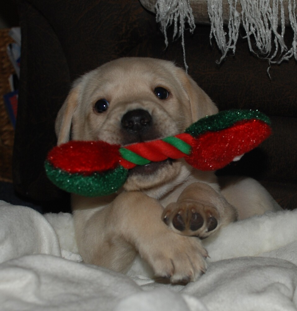 Puppy New Year! by Maddie